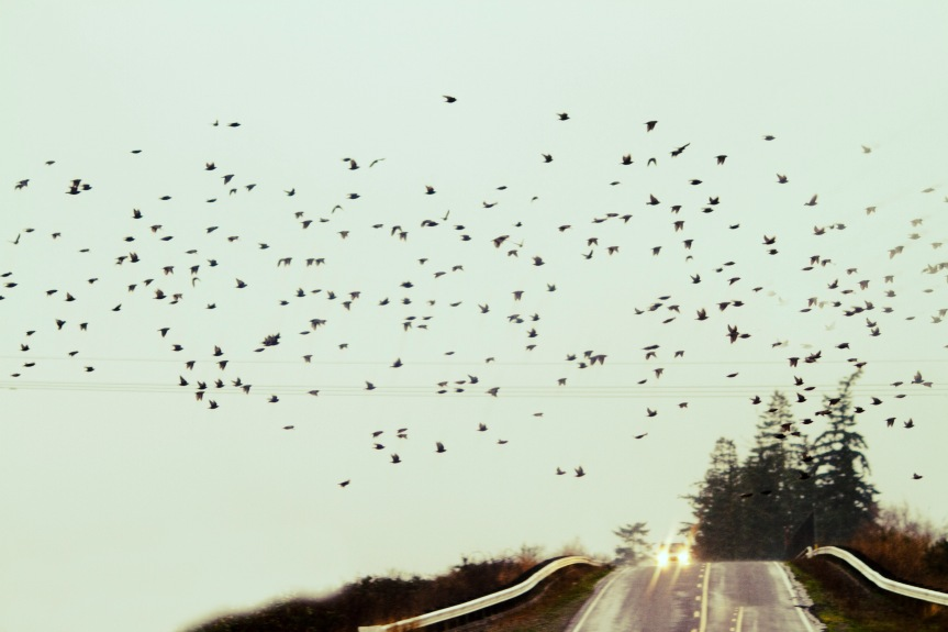 Bleak - Birds and Road