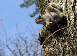 Feb - Squirrel copy