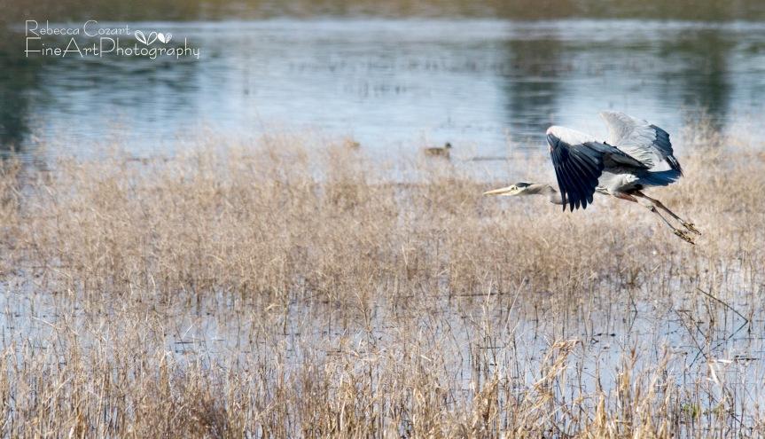 Birds - Awkward Heron