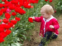 Tulips - baby with red tulip