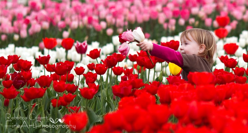 Tulips - boy in field with two tulips 2