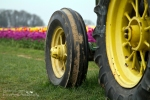 Tulips - tractor