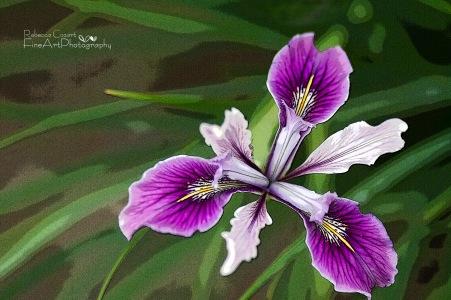 Odd - Iris postarized_1