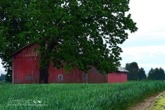 Odd - Red Barn Postarized