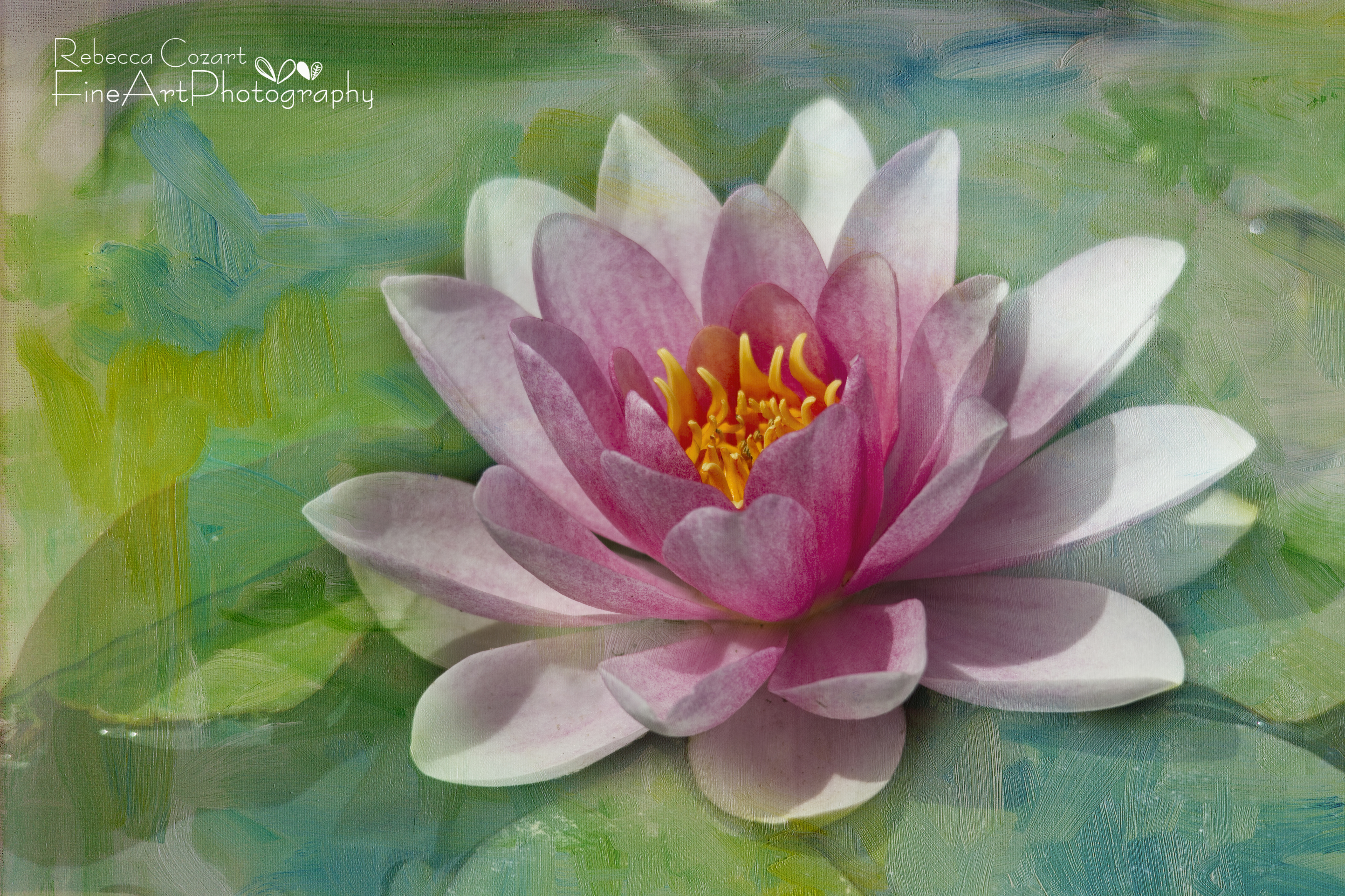 Water Lily Pink Lily Pad with texture – Eclectic