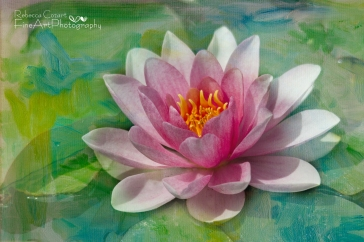 Water Lily- Pink Lily Pad with texture