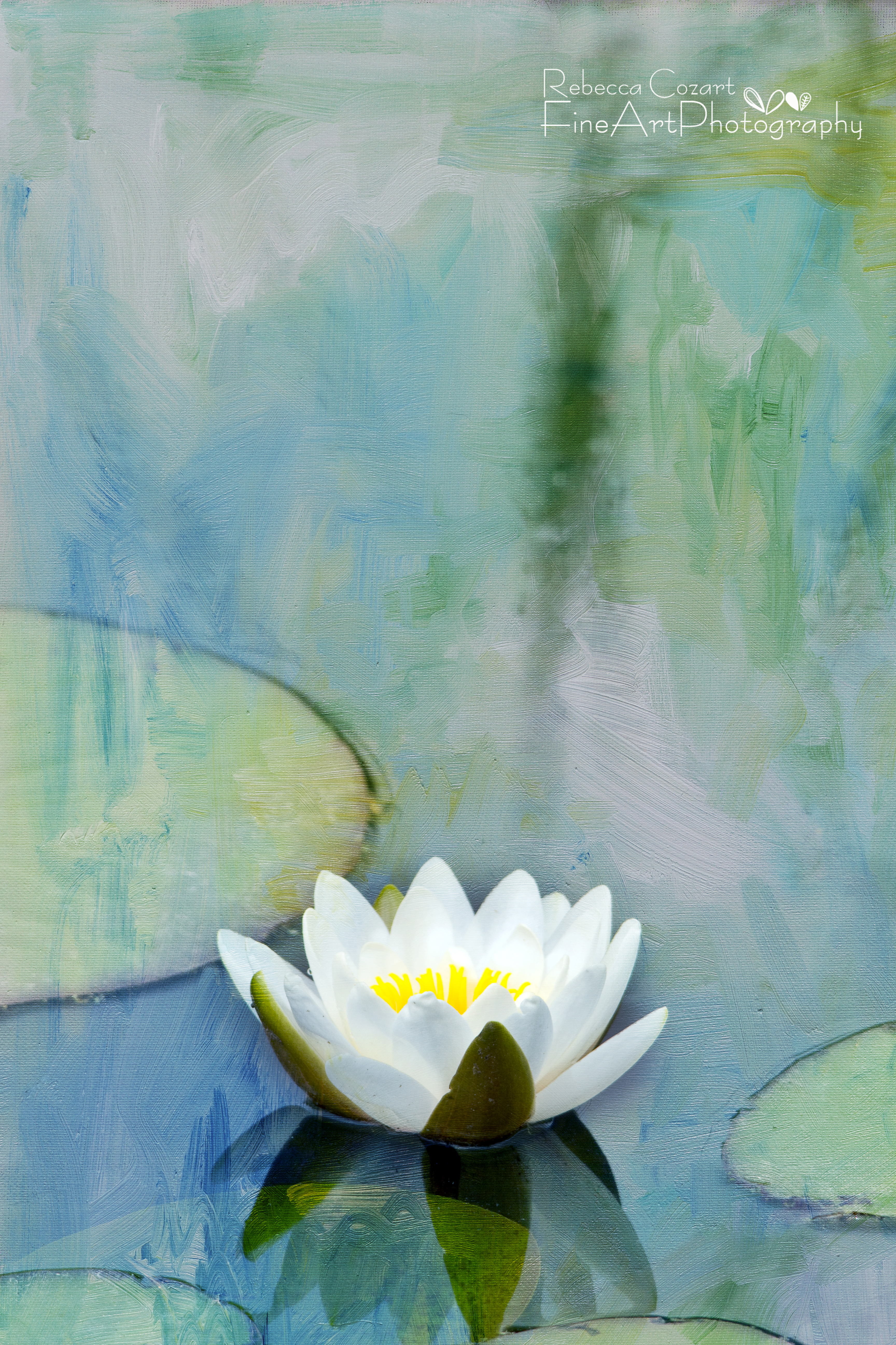 Water Lily - White Lily Pad 1 w texture - Eclectic Images