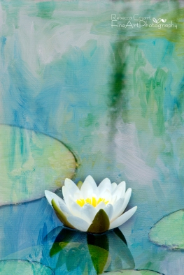 Water Lily - White Lily Pad 1 w texture