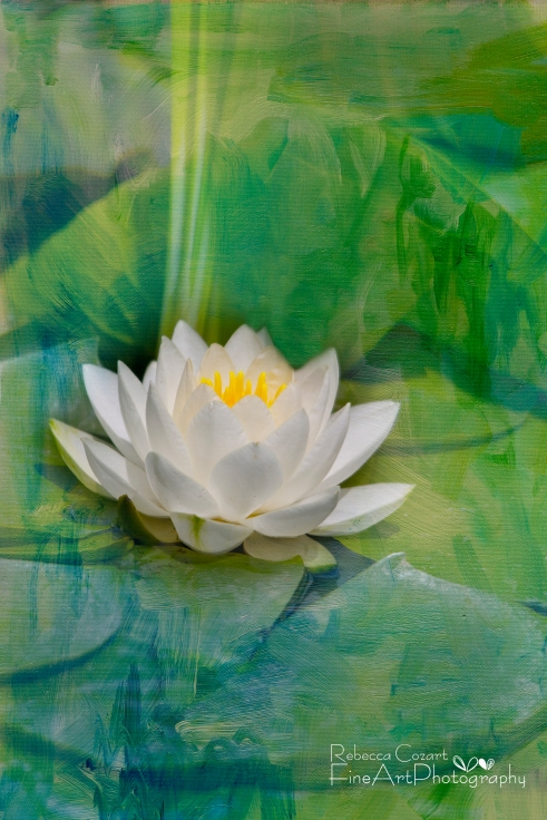 Water Lily- White Lily Pad 2 with texture
