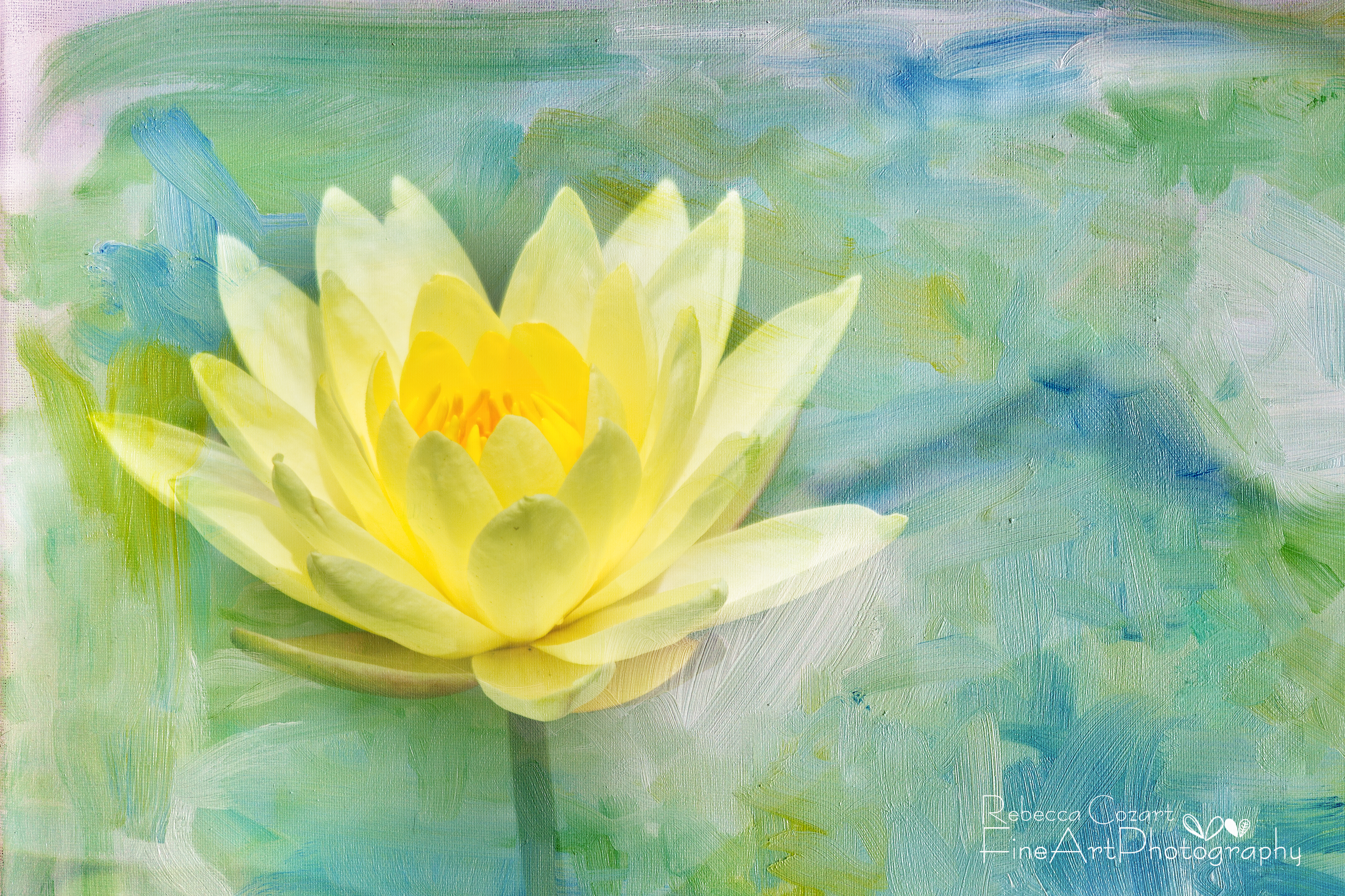 Water lily yellow lily pad with texture eclectic images water lily yellow lily pad with texture izmirmasajfo