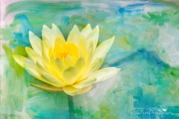 Water Lily - Yellow Lily Pad with texture