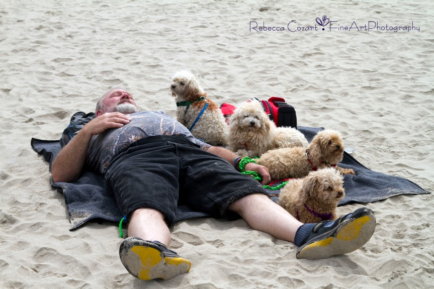 Beach - Guy on Beach with dogs