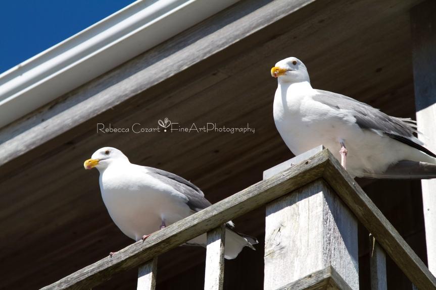 Beach - Seagulls