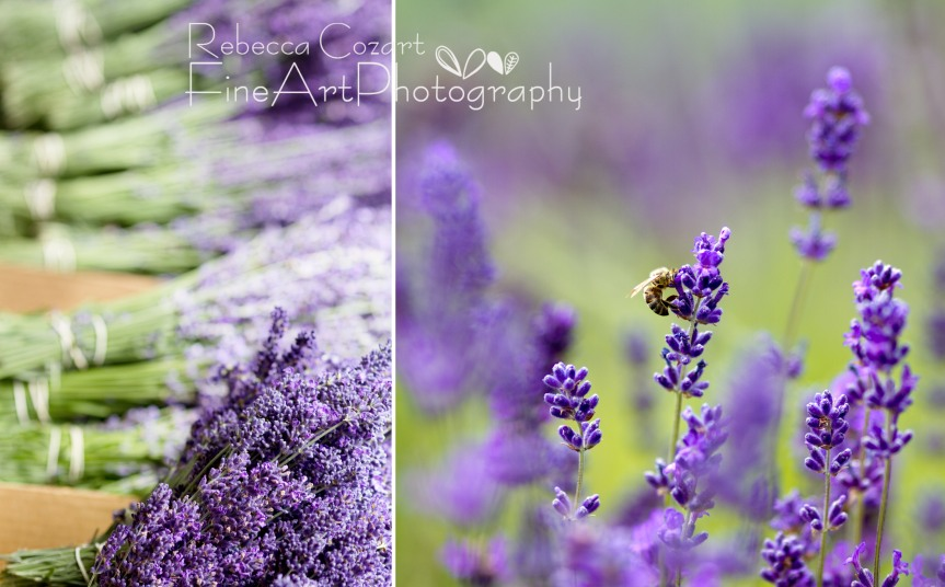 Lavender Diptych July 2