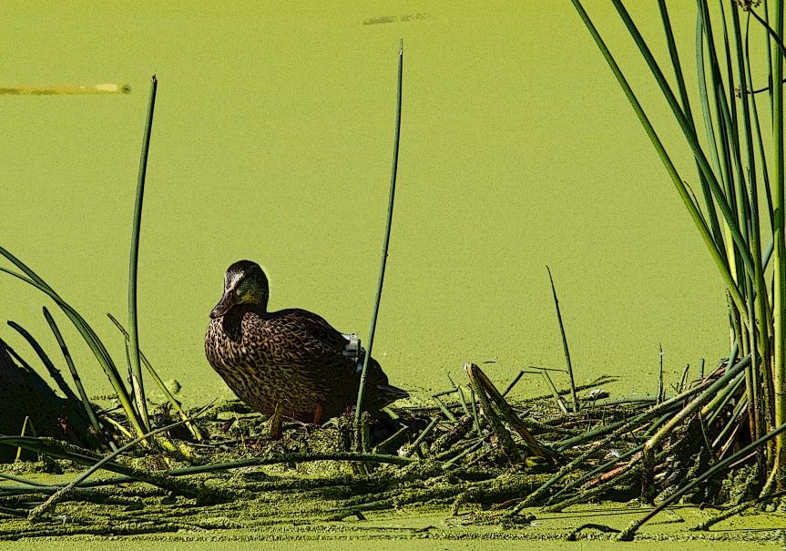 Muck - duck 2 poster