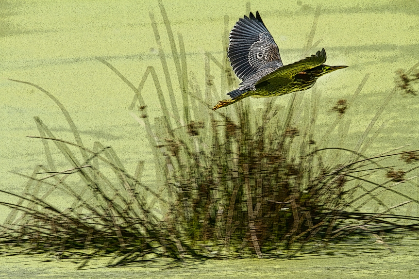 Muck - heron flying poster