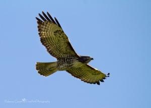 Bird - Flying
