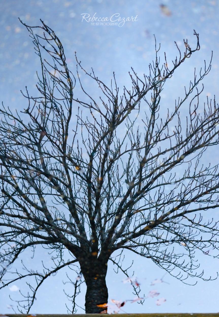 Tree Reflection 1 FB