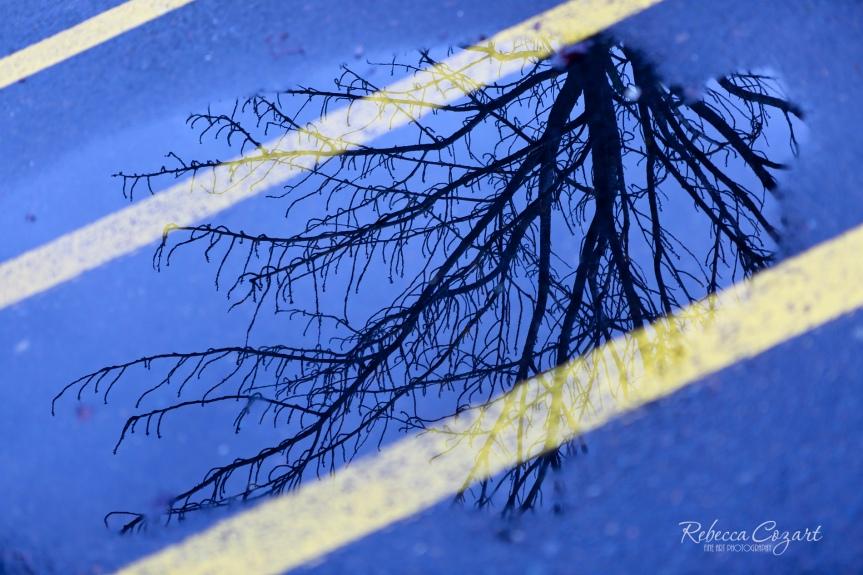Tree Reflection 3 FB