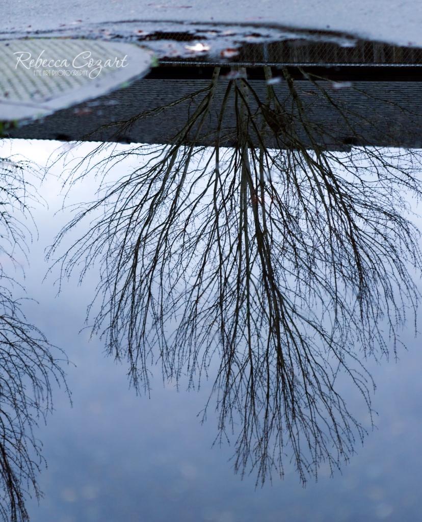 Tree Reflection 4 FB