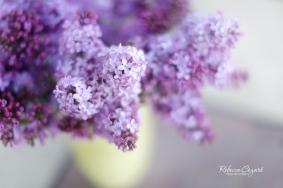 FB Lilacs - Top Down in Vase