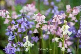 FB Pink blue white flowers Deepwood