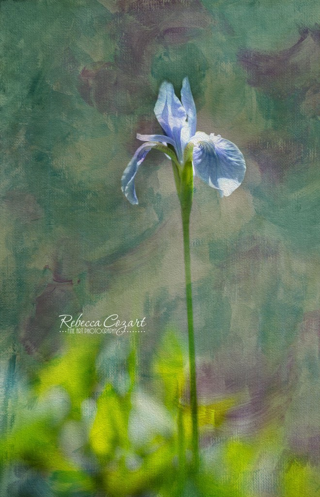 FLOWERS - Iris with texture oil paint