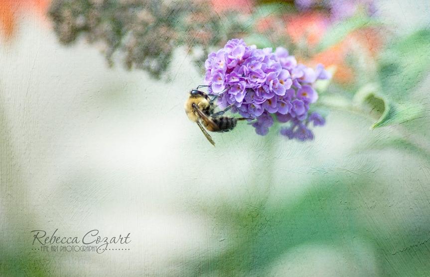Bee last drop