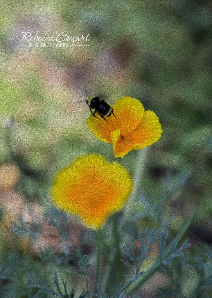 Bee Lift Off