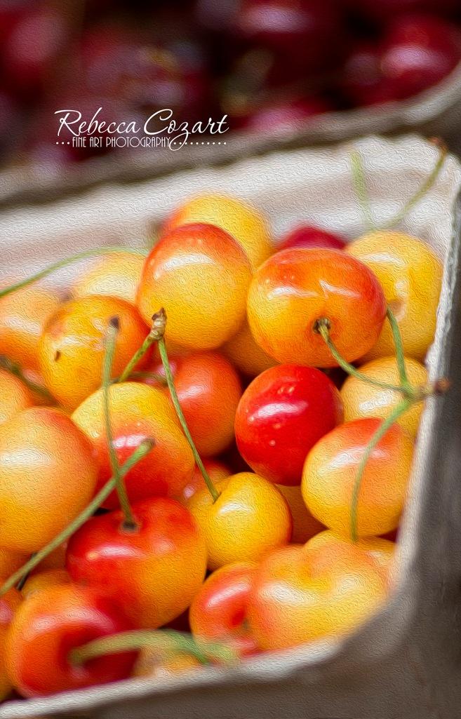 cherries oil paint