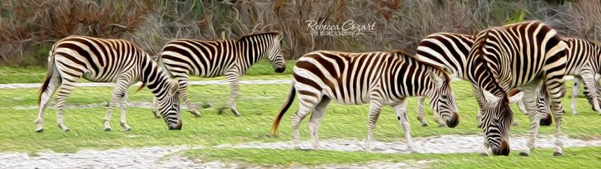 Zebra Group 1 oil paint