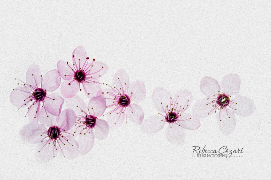 OIL PAINT - pink blossoms 3