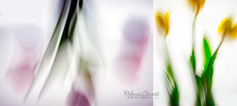 FLOWERS - Tulip Impression Diptych