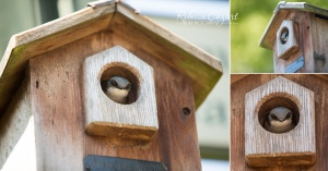 COLLAGE - Bird in birdhouse