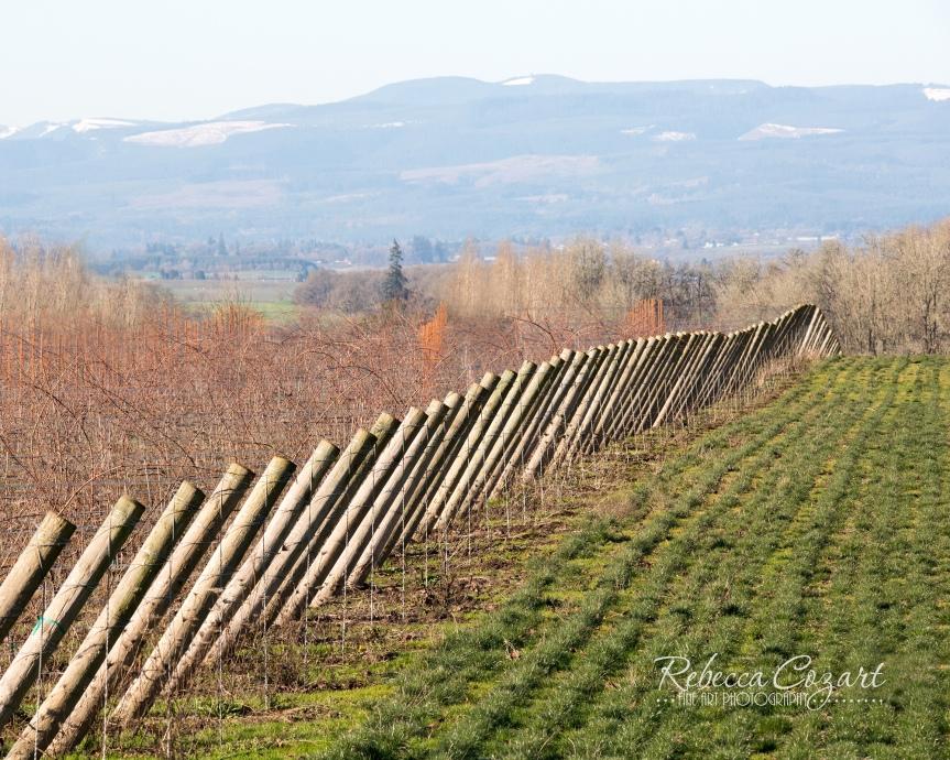 LANDSCAPE - Fenceline