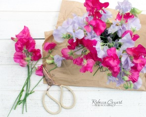 STILL LIFE - Sweet Peas with Scissors and brown paper