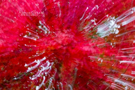 abstract-leaves-19