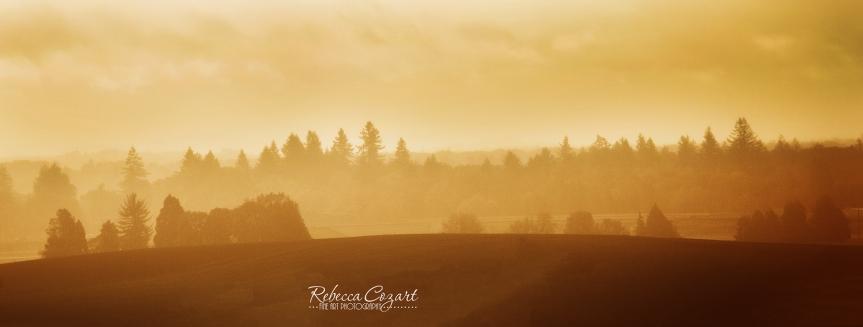 landscape-hills-golden