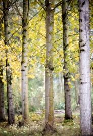 odd-trees
