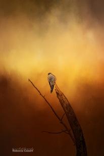 birds-hawk-in-tree-with-texture