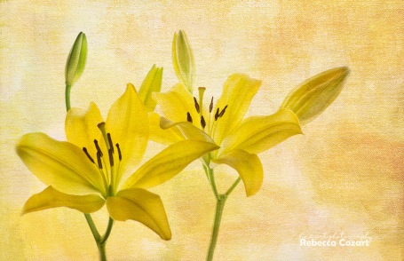flowers-yellow-lilies-with-canvas-texture