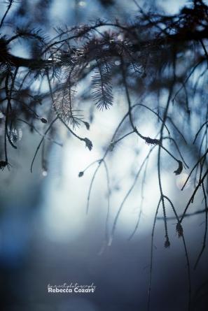 odd-winter-branches-2