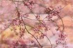 Flowers (103 of 103)