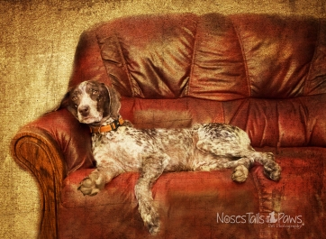 DOG - Dog on Couch with Texture